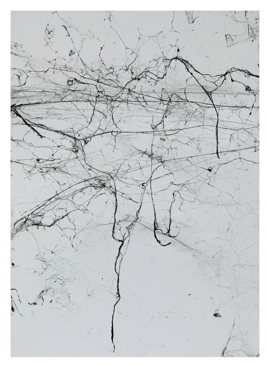 Impressione#-24-,-spider-webs-on-adhesive-paper-50x70cm-small